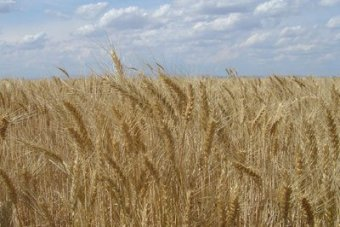 Mining act review: What does it mean for grain farmers across South Australia?