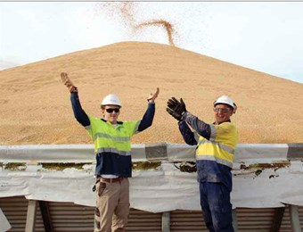 Yorke Peninsula tops the state for grain receivals
