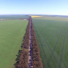 Yorke Peninsula is top of the crop for farm land prices